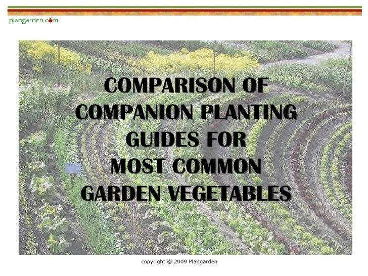COMPARISON OF COMPANION PLANTING     GUIDES FOR   MOST COMMON GARDEN VEGETABLES       copyright © 2009 Plangarden