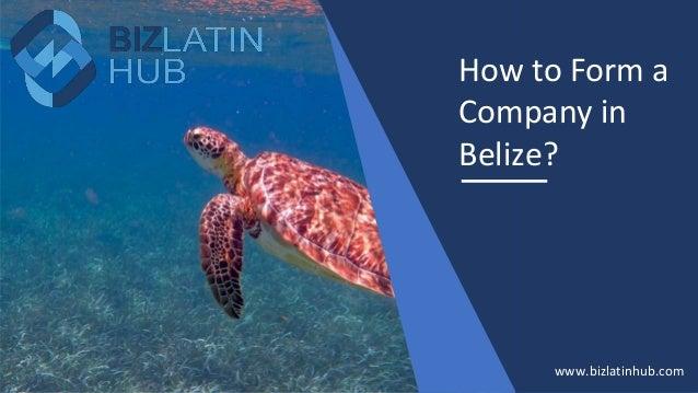 How to Form a Company in Belize? www.bizlatinhub.com