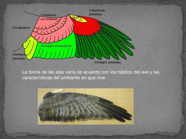 Comparación de las alas de murciélagos, mariposa y aves.