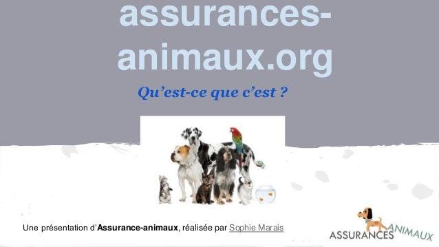 assurances- animaux.org Qu'est-ce que c'est ? Une présentation d'Assurance-animaux, réalisée par Sophie Marais