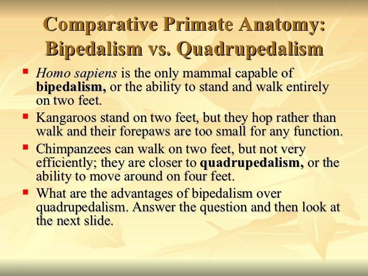 Anatomy of bipedalism