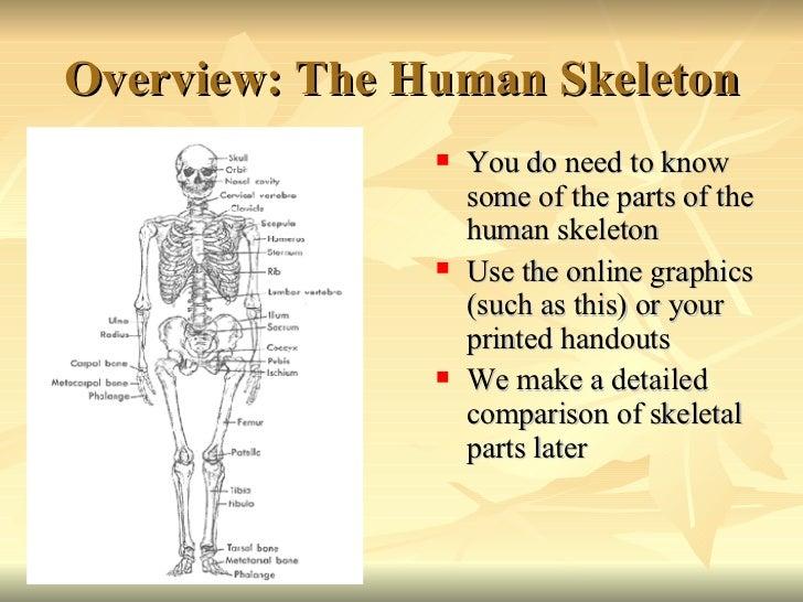 Comparative primate anatomy