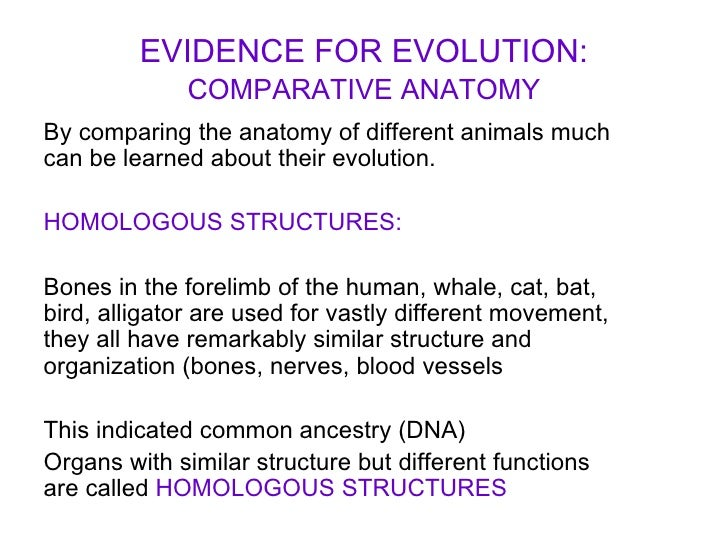 Comparative Anatomy – Comparative Anatomy Worksheet