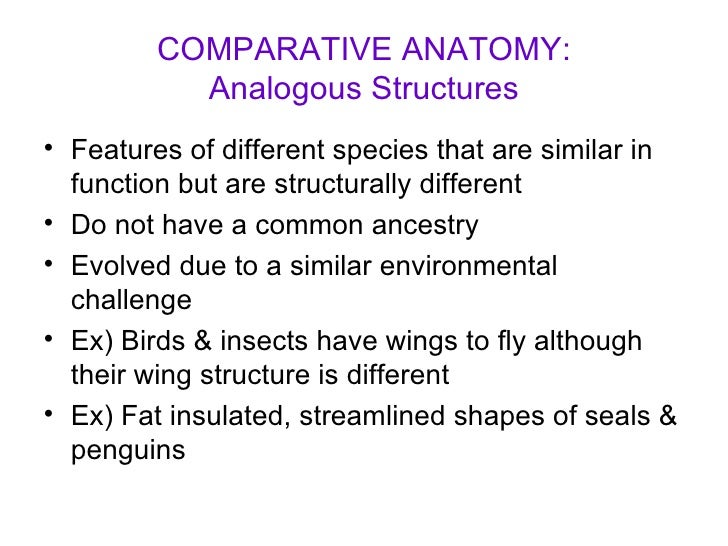 comparative anatomy essay Here is a model breakdown, showing the structure of a hypothetical 22- paragraph essay, which would normally work out to about 10-12 pages each  gray.