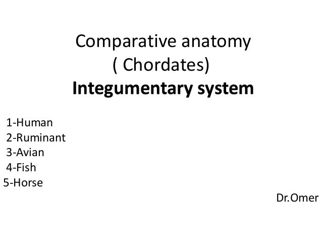 Comparative Anatomy Integumentary System