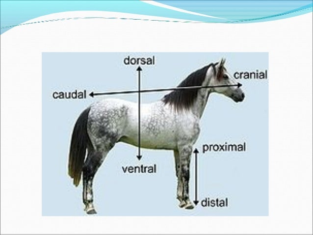 Comparative skeletal anatomy