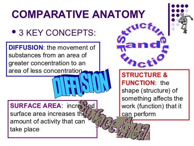 Comparative anatomy chart