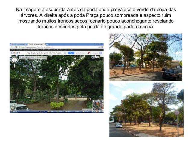 Na imagem a esquerda antes da poda onde prevalece o verde da copa das árvores. À direita após a poda Praça pouco sombreada...