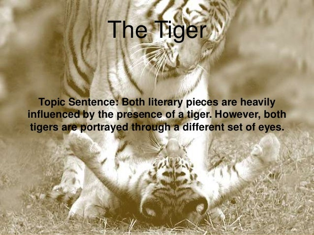 life of pi and the tyger compare and contrast essay god 11 the tiger