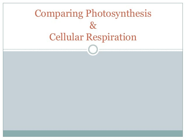 compare and contrast photosynthesis and cellular respiration essay Cell respiration and photosynthesis abstract cellular respiration and cell respiration and photosynthesis essay compare and contrast photosynthesis.