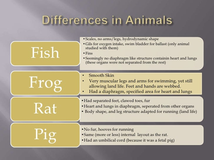 Comparison Of Fish Frog Rat And Pig Dissections