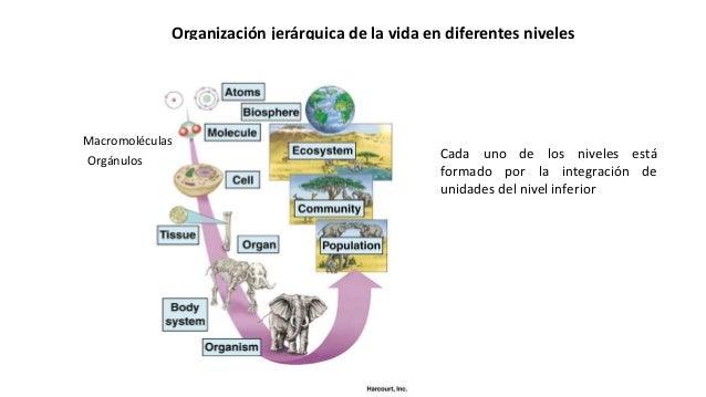 Organización jerárquica de la vida en diferentes niveles Cada uno de los niveles está formado por la integración de unidad...