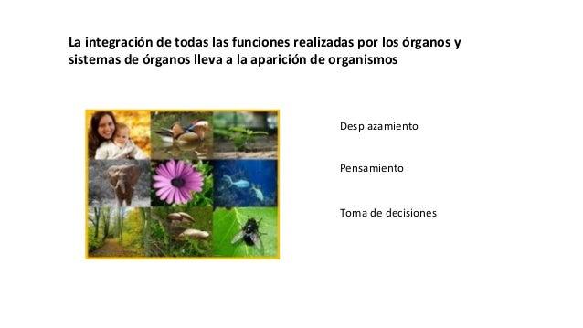 La integración de todas las funciones realizadas por los órganos y sistemas de órganos lleva a la aparición de organismos ...