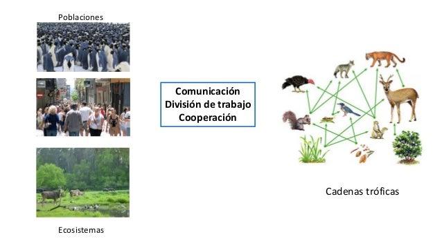 Comunicación División de trabajo Cooperación Cadenas tróficas Ecosistemas Poblaciones