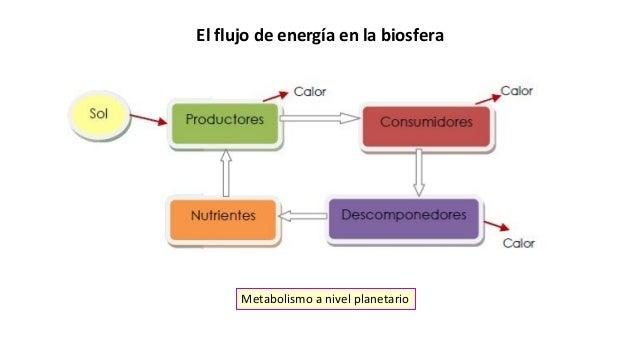 El flujo de energía en la biosfera Metabolismo a nivel planetario