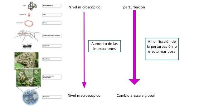 Nivel microscópico Nivel macroscópico Aumento de las interacciones perturbación Amplificación de la perturbación o efecto ...