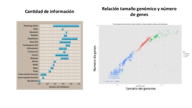 Cantidad de información Tamaño del genoma Númerodegenes Relación tamaño genómico y número de genes