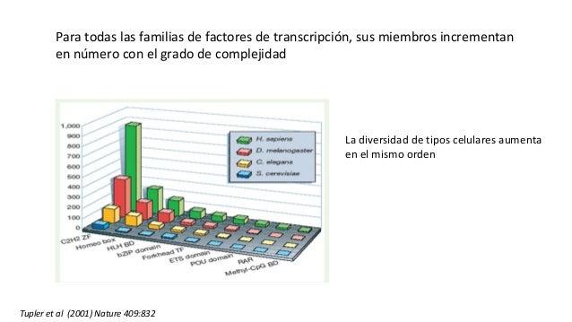 Para todas las familias de factores de transcripción, sus miembros incrementan en número con el grado de complejidad La di...