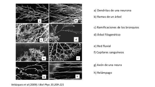 a) Dendritas de una neurona b) Ramas de un árbol c) Ramificaciones de los bronquios d) Árbol filogenético e) Red fluvial f...