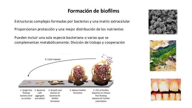 Formación de biofilms Estructuras complejas formadas por bacterias y una matriz extracelular Pueden incluir una sola espec...