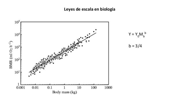 Y = Y0 Mb b Leyes de escala en biología b = 3/4