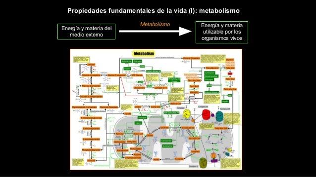 Propiedades fundamentales de la vida (I): metabolismo Energía y materia del medio externo Energía y materia utilizable por...