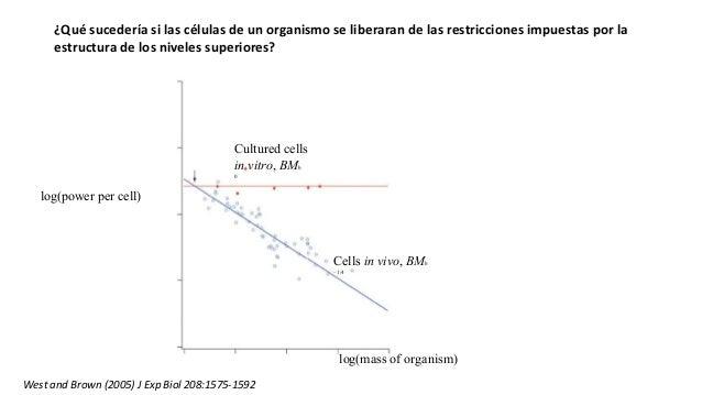 Cultured cells in vitro, BMb 0 Cells in vivo, BMb –1/4 log(mass of organism) log(power per cell) ¿Qué sucedería si las cél...