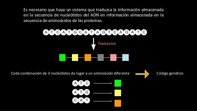 Es necesario que haya un sistema que traduzca la información almacenada en la secuencia de nucleótidos del ADN en informac...