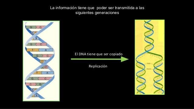 El DNA tiene que ser copiado Replicación La información tiene que poder ser transmitida a las siguientes generaciones