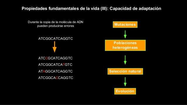 Poblaciones heterogéneas Mutaciones Selección natural Evolución Propiedades fundamentales de la vida (III): Capacidad de a...