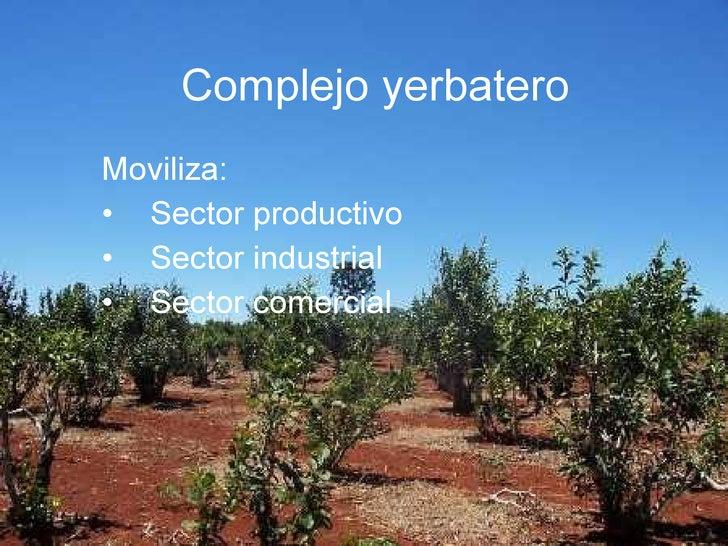 Circuito Yerbatero : Complejo yerbatero
