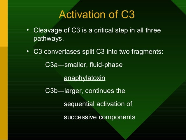 Activation of C3 • Cleavage of C3 is a critical step in all three pathways. • C3 convertases split C3 into two fragments: ...