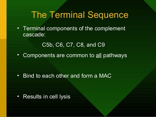 The Terminal Sequence • Terminal components of the complement cascade: C5b, C6, C7, C8, and C9 • Components are common to ...