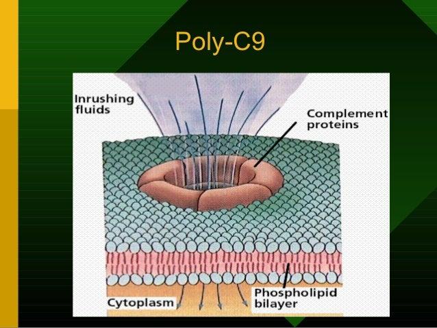 Poly-C9