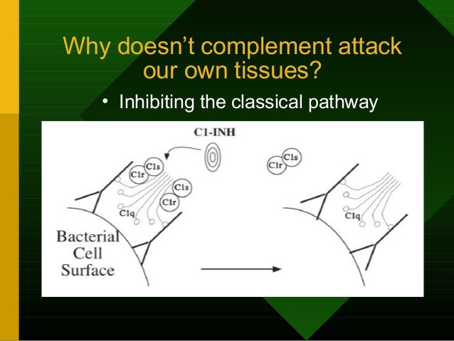 Why doesn't complement attack our own tissues? • Inhibiting the classical pathway