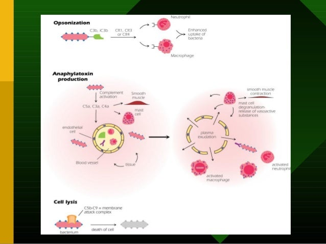 Enhancing B Cell Responses to Antigens