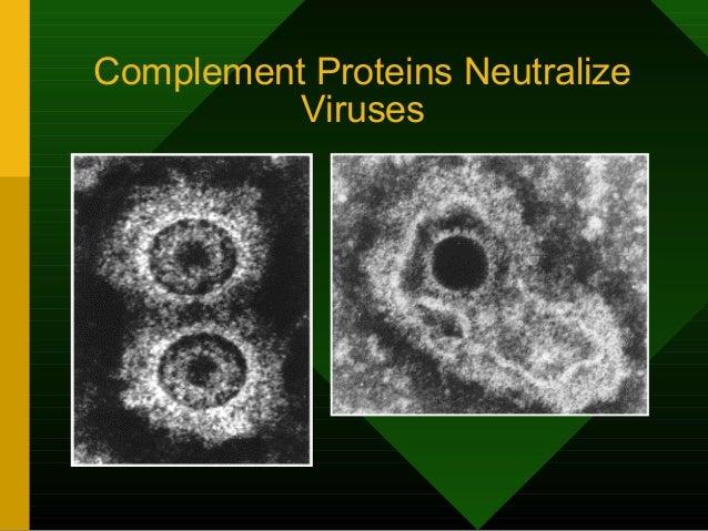 Uncoated Epstein-Barr Virus (EBV)