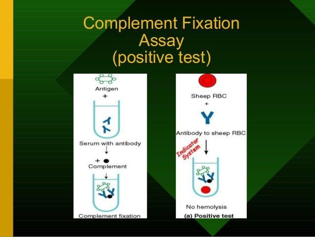 Complement Fixation Assay (negative test)