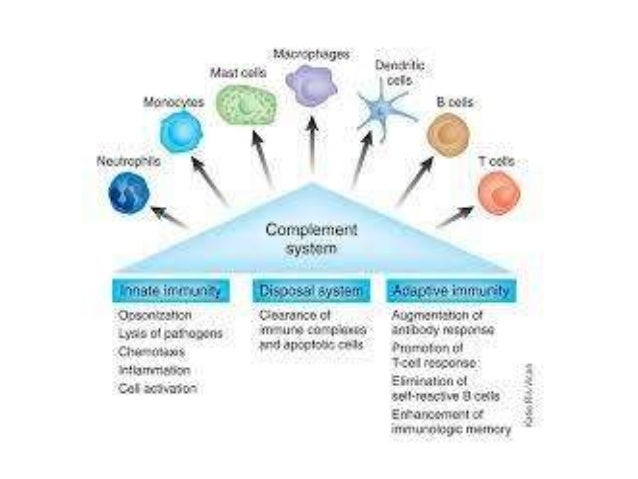 THE COMPLEMENT SYSTEM: AN OVERVIEW