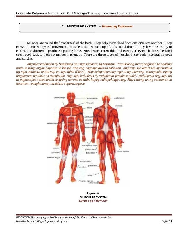 Anatomy For Massage Therapists Choice Image - human body anatomy