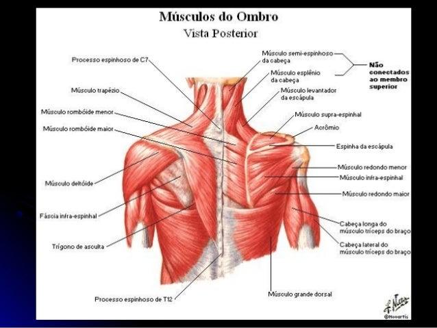 Complexo Articular Do Ombro