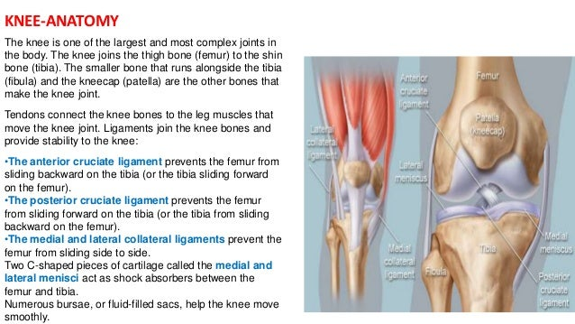 Complications of total knee replacement knee anatomy ccuart Gallery