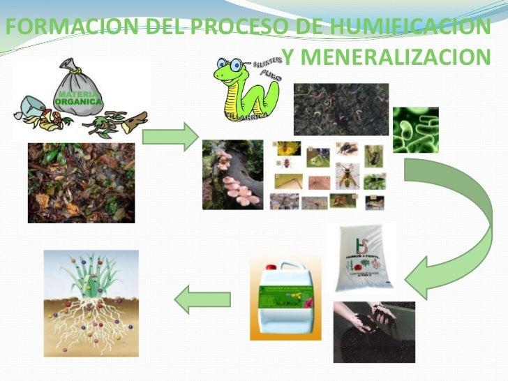 Componente organico del suelo for Proceso de formacion del suelo