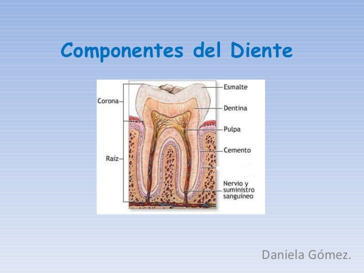 Componentes del Diente Daniela Gómez.