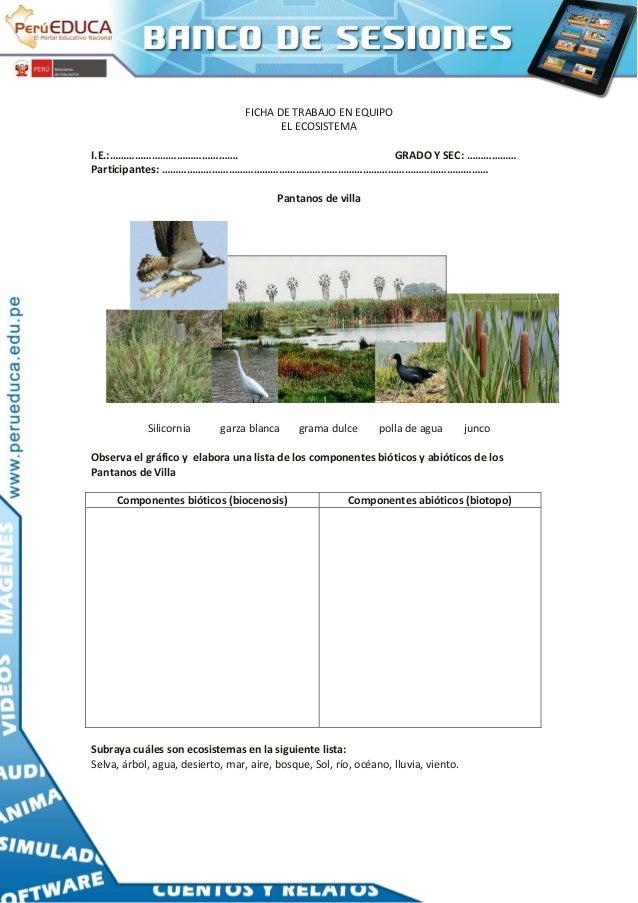Componentes Del Ecosistema 638 Cb Mapa Conceptual Suelo