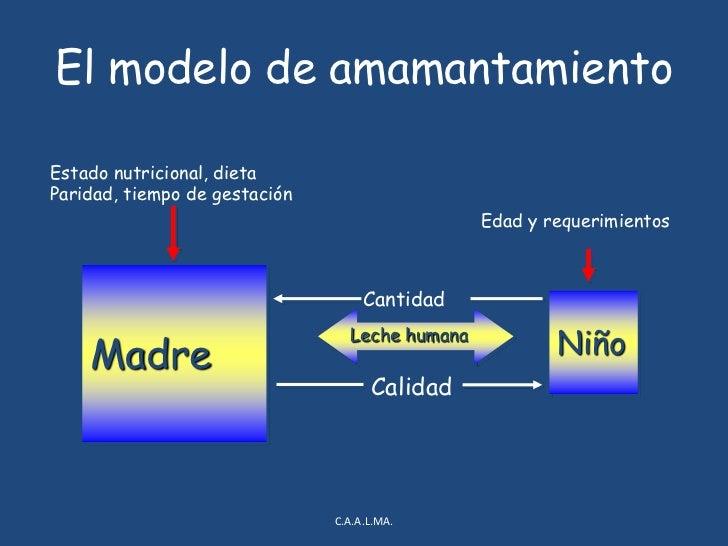 El modelo de amamantamiento<br />C.A.A.L.MA.<br />Estado nutricional, dieta<br />Paridad, tiempo de gestación<br />Edad y ...