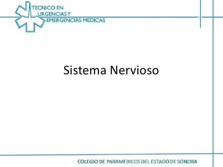 Sistema Nervioso <br />