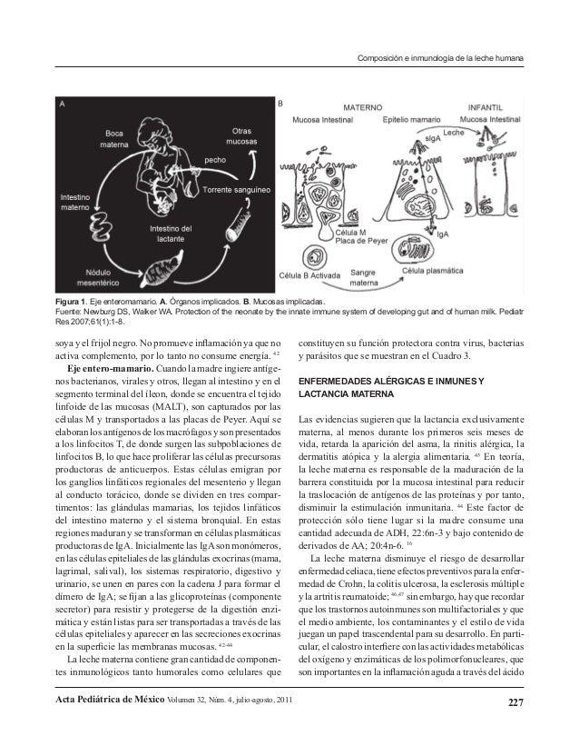 Composición e inmunología de la leche humana  Figura 1. Eje enteromamario. A. Órganos implicados. B. Mucosas implicadas. F...