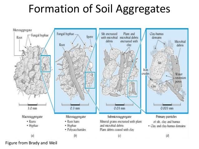 Petaluma community guild guild compost forum joshua for Formation of soil diagram