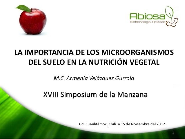 LA IMPORTANCIA DE LOS MICROORGANISMOS DEL SUELO EN LA NUTRICIÓN VEGETAL M.C. Armenia Velázquez Gurrola  XVIII Simposium de...